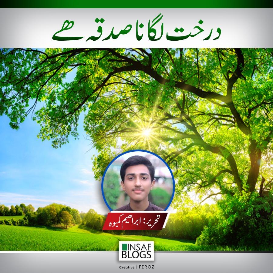 Tree Plantation - Insaf Blog